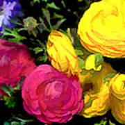 Red And Yellow Ranunculus Flowers Art Print