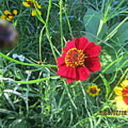 Red And Yellow Tiny Flowers Art Print