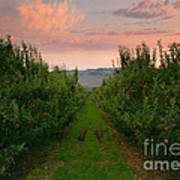 Red Apple Sunset Print by Mike  Dawson