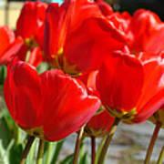 Red Art Spring Tulip Flowers Floral Art Print