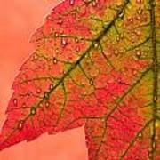 Red Autumn Art Print by Carol Leigh