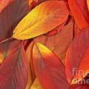 Red Autumn Leaves Pile Art Print