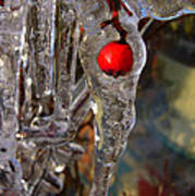 Red Berry In Icicle Art Print