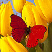 Red Butterful On Yellow Tulips Art Print