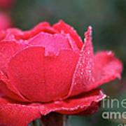 Red Crystal Petals Art Print