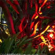 Red Entanglement Art Print