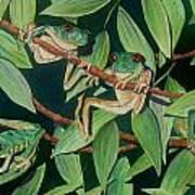 Red Eyed Tree Frogs IIi Art Print