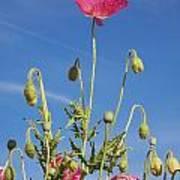 Red Flower Against Blue Sky Art Print