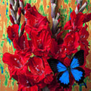 Red Gladiolus And Blue Butterfly Art Print