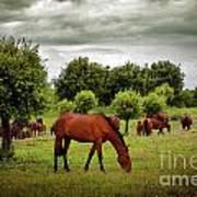 Red Horses Art Print