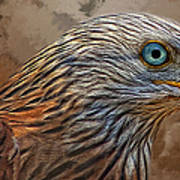 Red Kite - Featured In The Groups - Spectacular Artworks And Wildlife Art Print