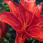 Red Lily Art Print