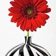 Red Mum In Striped Vase Art Print