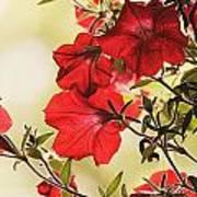 Red Petunias Art Print