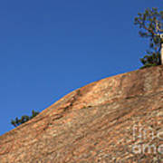 Red Pine Tree Art Print by Ted Kinsman