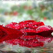 Red Rose Reflections Art Print