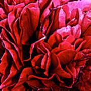 Red Ruffles Art Print