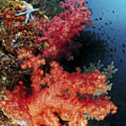 Red Soft Corals And Blue Leather Sea Art Print