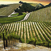 Red Soles Vineyard Art Print