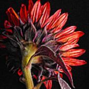Red Sunflower X Art Print