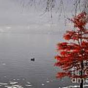 Red Tree On The Lake Front Art Print