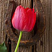 Red Tulip And Horseshoe  Art Print