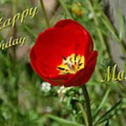 Red Tulip Birthday Art Print