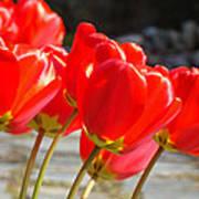 Red Tulip Flowers Art Prints Spring Florals Art Print