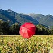 Red Umbrella On The Field Art Print