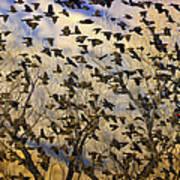 Red-winged Blackbirds At Sunset Art Print
