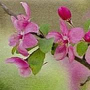 Redbud Branch Art Print