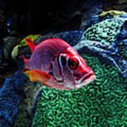 Redfish Art Print