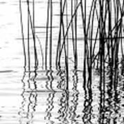 Reeds On The Turtle Flambeau Flowage Art Print