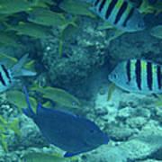 Reef Fish Art Print