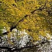 Reflecting Autumn Tree Art Print