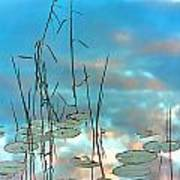 Reflection - Reeds And Pond Lilies Art Print