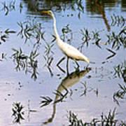 Reflections Of A White Bird Art Print