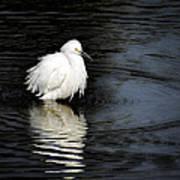 Reflections Of An Egret  Art Print