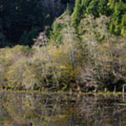 Reflections On Marshall Pond Art Print