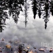Reflective Wetlands Art Print