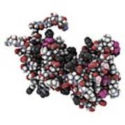 Rgs Domain Molecule Art Print