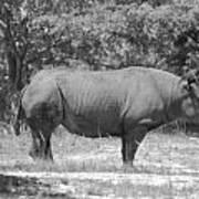Rhino In Black And White Art Print