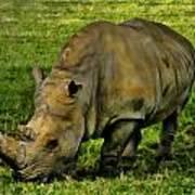 Rhinoceros 101 Art Print