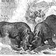 Rhinoceros Fight, 1875 Art Print