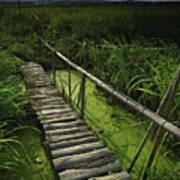 Rice Bridge Art Print