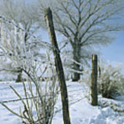 Rime From Rare Fog Coats Fence Art Print by Gordon Wiltsie