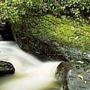 River Flowing Through A Forest, Torc Art Print