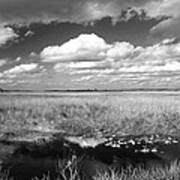 River Of Grass - The Everglades Art Print