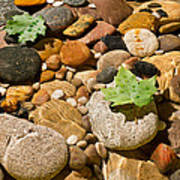 River Stones Print by Steve Gadomski