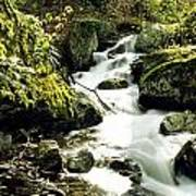 River With Rocks In The Forest Art Print
